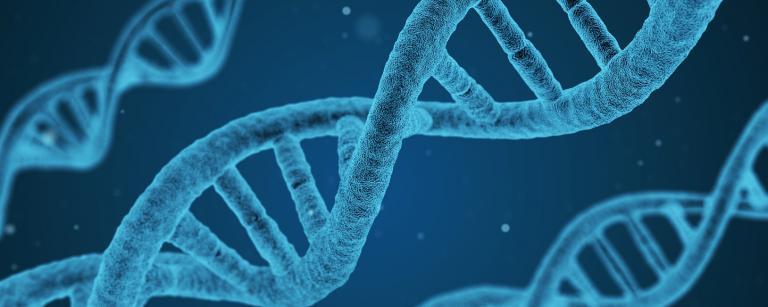 DNA Rechthoek e1541348575923
